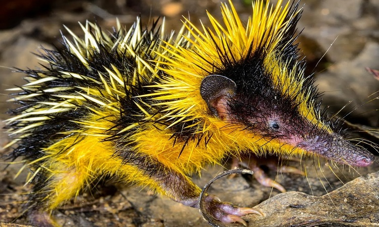 Редките животни на планетата земя