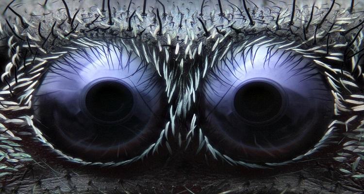 Невероятни снимки на животински очи от близък план
