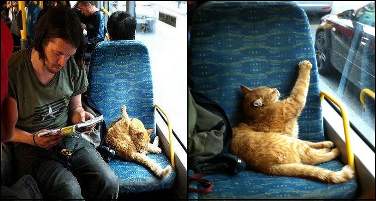 Най- известната котка в света