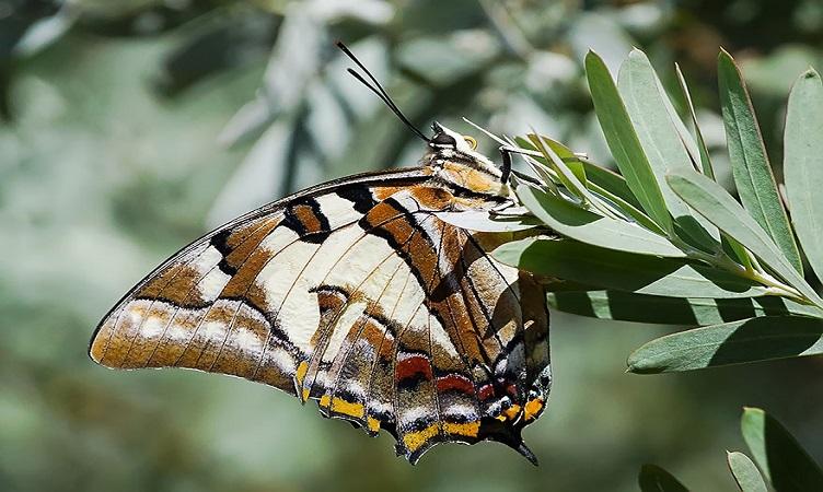 Трансформации в природата