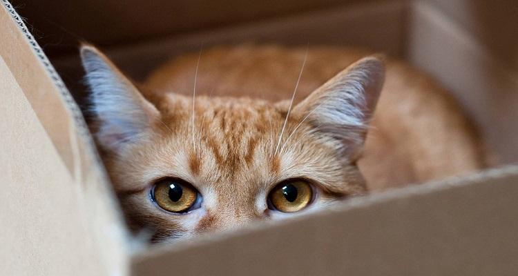 Защо котките обичат да спят в малки кутии и на тесни места?
