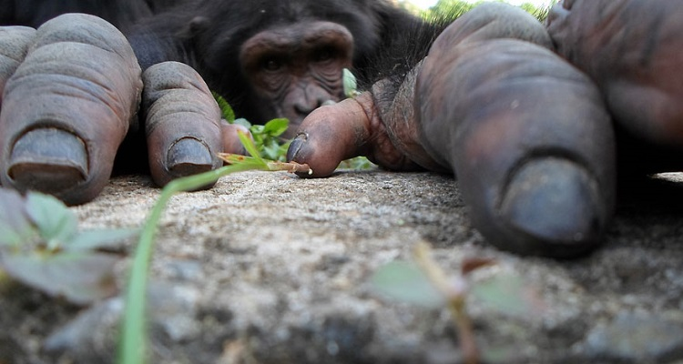 20 невероятни снимки на животни от National Geographic
