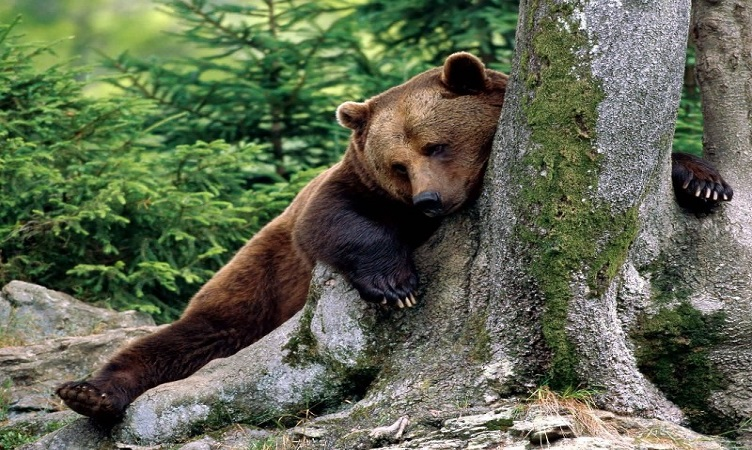 Изчезващи животни - Червената книга на България