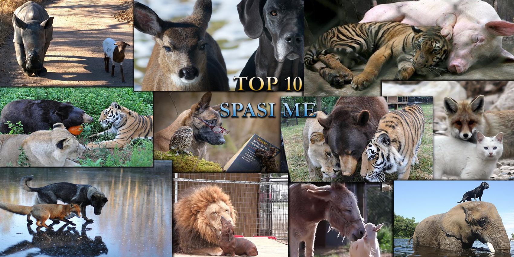 Топ 10 най- невероятни приятелства между животни