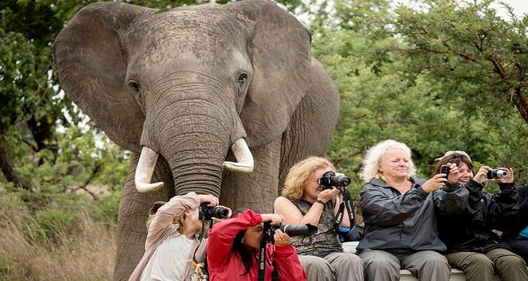 Компилация от най-добрите фотобомби с животни