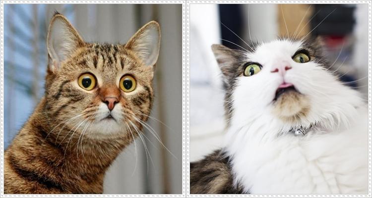 Шокирани изражения на животни
