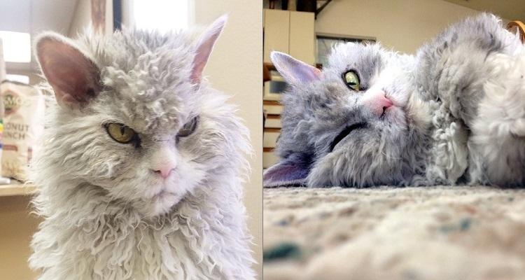 Албърт - котката-овца, която гледа лошо.