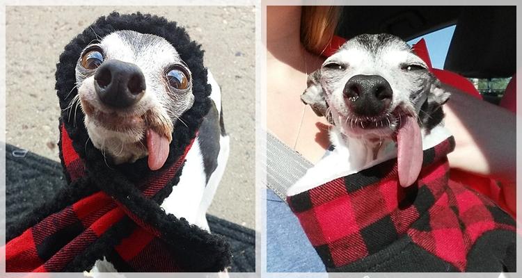 Кучето двойник на Сид от Ледена епоха