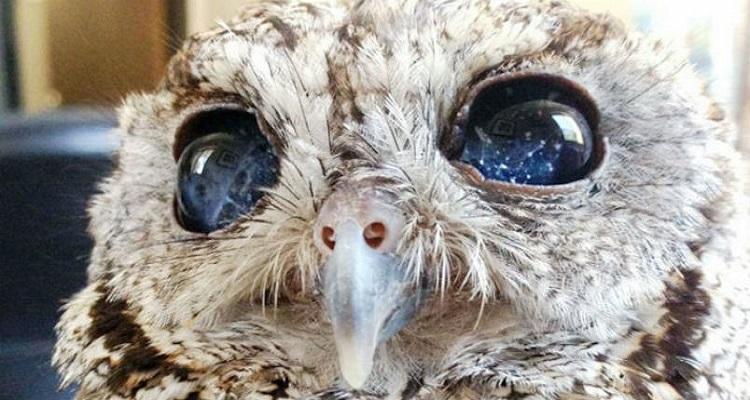 Зевс – сляпата сова, в чийто очи се отразява звездното небе