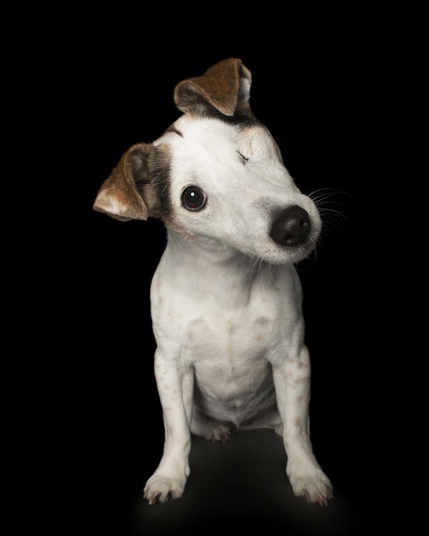 Портрети на кучета, които са перфектно несъвършени