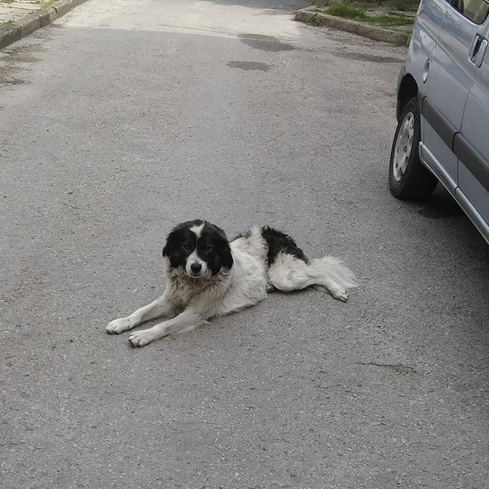 Куче от Хасково търси дом