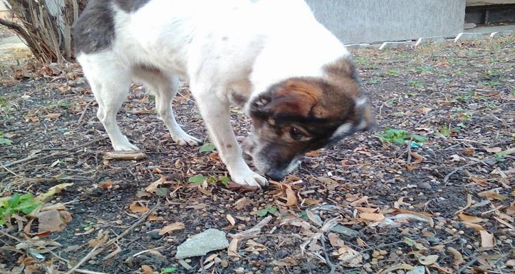 Куче търси дом - Луиза от София