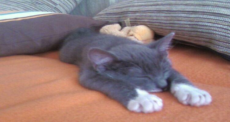 Коте от София си търси дом | Котката Чочи