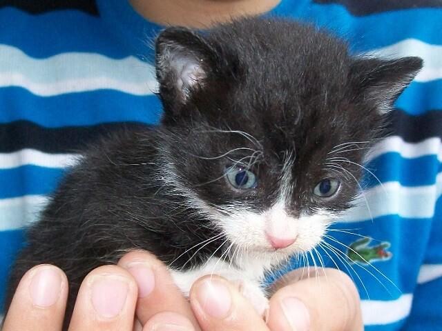 Малко котенце си търси дом Пловдив