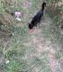 Бездомно черно коте се нуждае от помощ - София