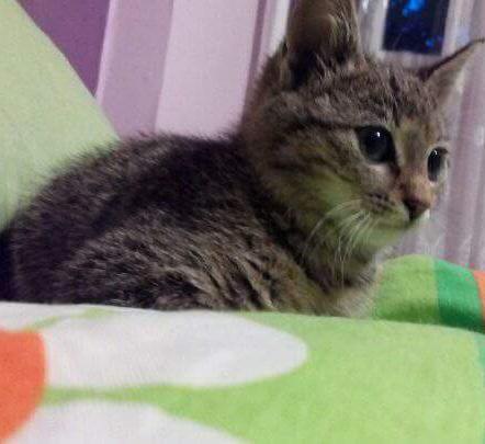 Малко котенце си търси дом спешно | София