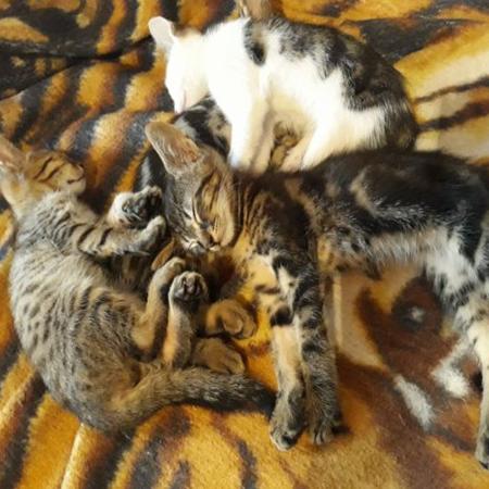 7 котенца на около 2-3 месеца от София си търсят дом