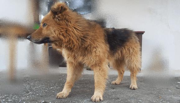 Куче си търси дом град София