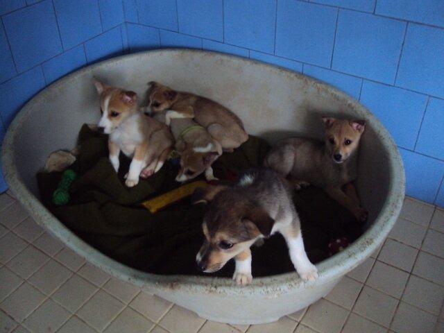 Кученца си търсят дом | София