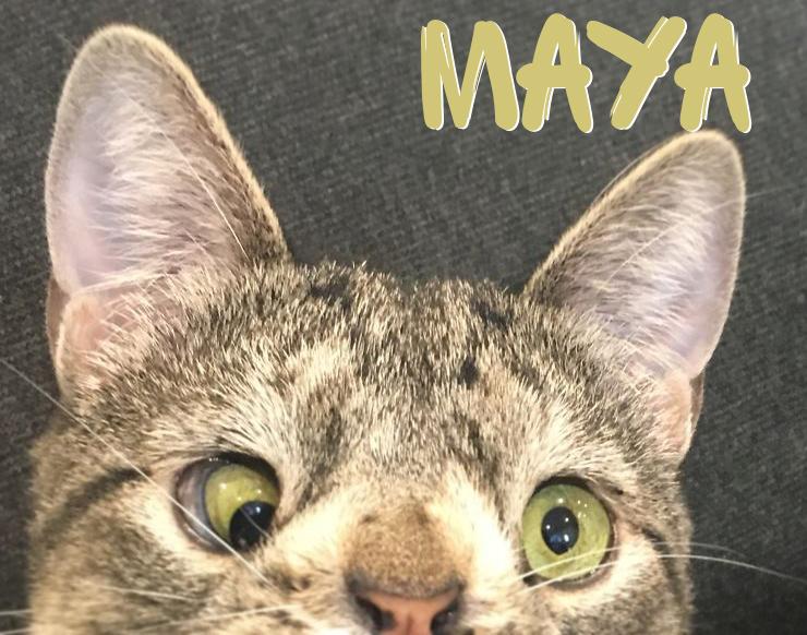 МАЯ - котката, която изглежда малко по-различно