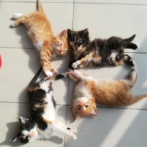 Две мъжки и две женски котета търсят дом