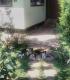 Търсим дом за 4 малки котенца от София
