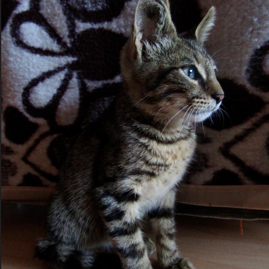 Малко котенце търси дом| София