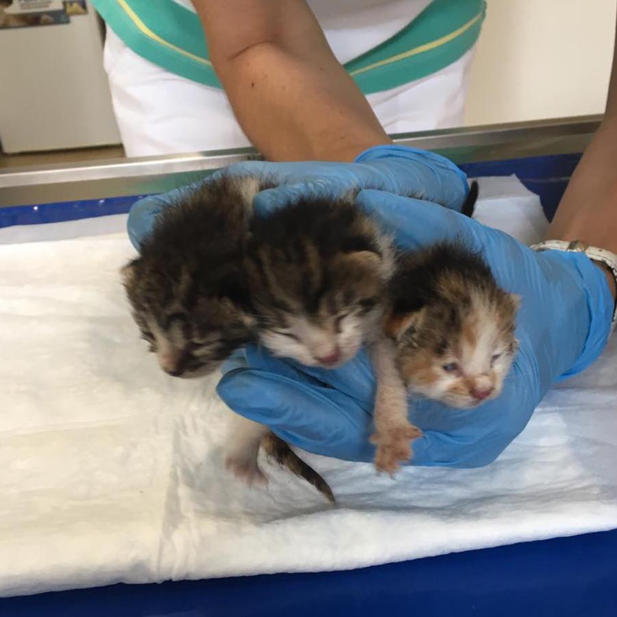 Котета-бебета се нуждаят от дом