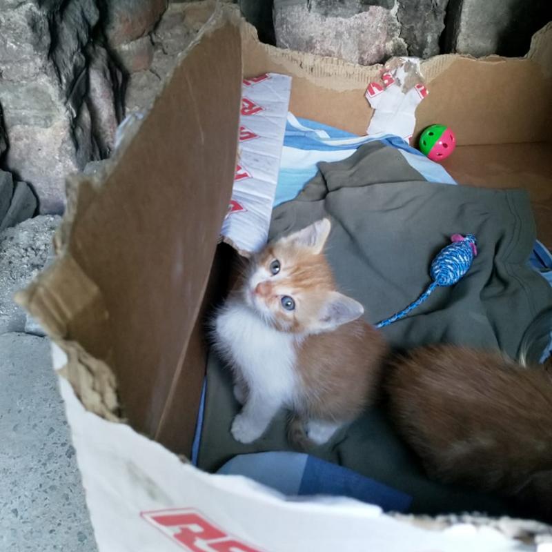 Търсим дом за две малки котета от София