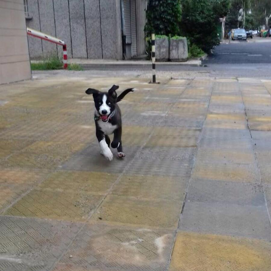 Кученцето Балто си търси дом