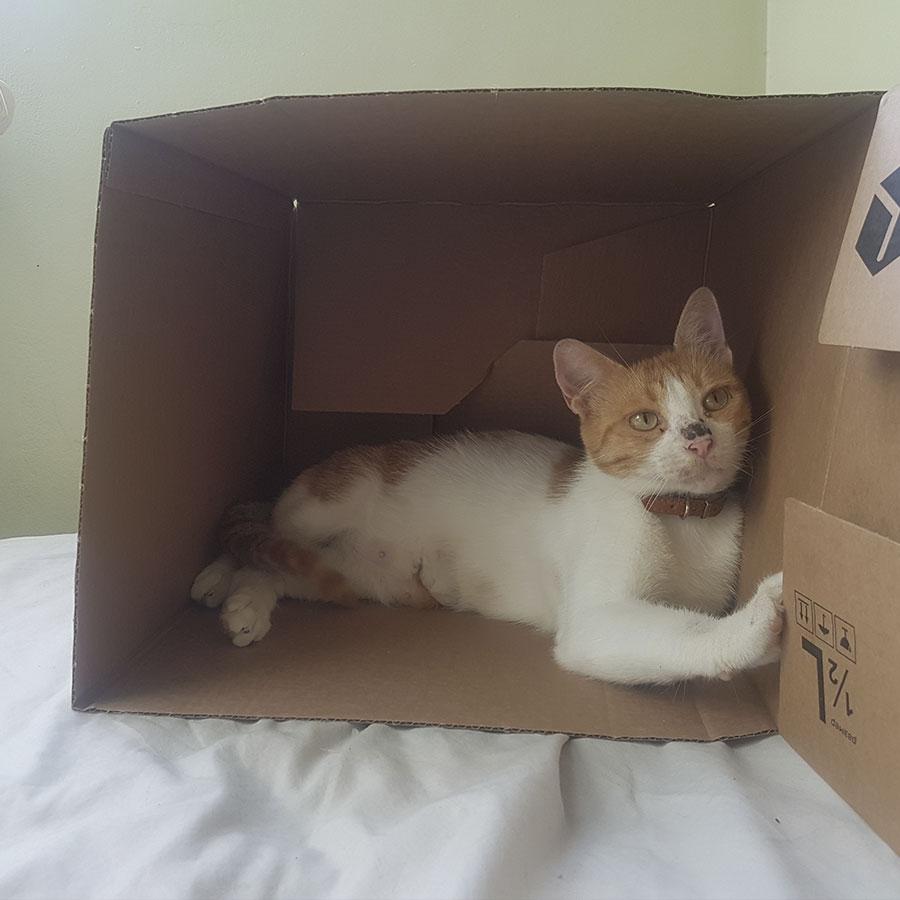 Коте търси дом | София