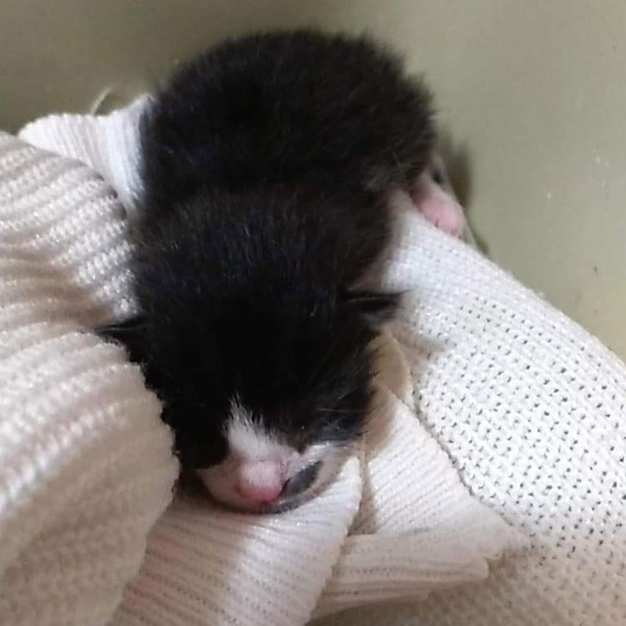 Малко котенце търси дом Варна