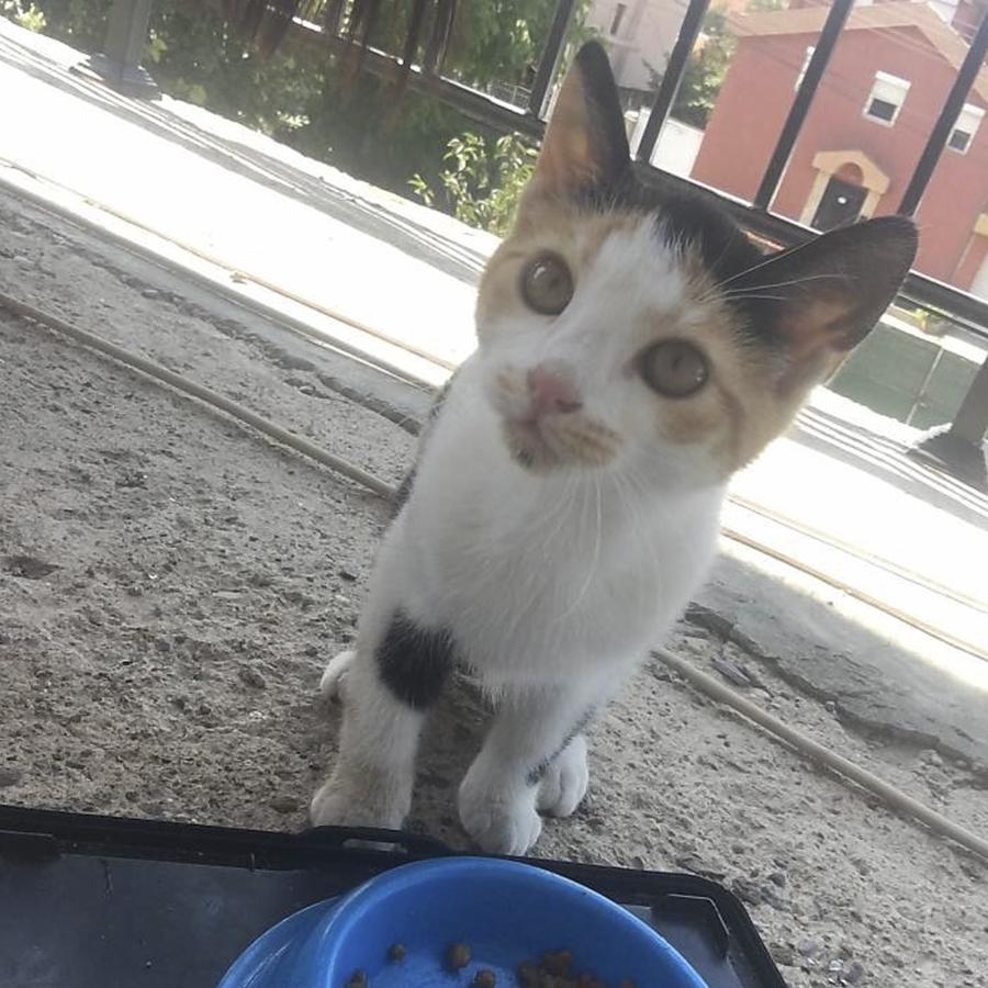 Три игриви котета търсят дом